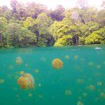 Vẻ đẹp lung linh của đảo Kakaban