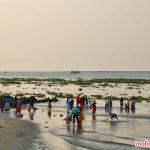 Bãi biển Fort Kochi