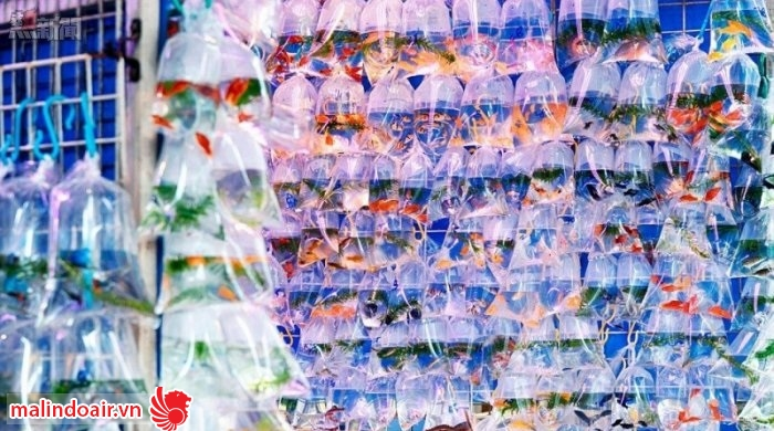 Khu chợ cá vàng rực rỡ màu sắc