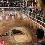 """Cuộc thi """"chó nhà trọi lợn rừng"""" của người Indonesia"""