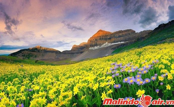 Công viên quốc gia Thung lũng của các loài hoa
