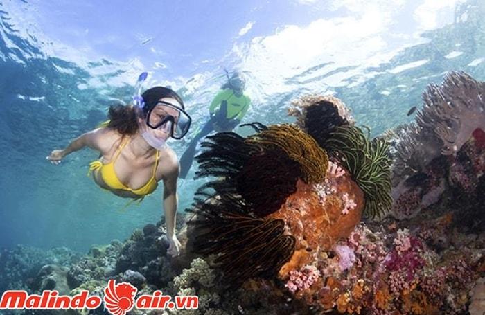 Lặn biển ở Wakatobi