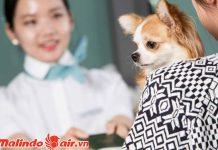 Mang động vật lên máy bay