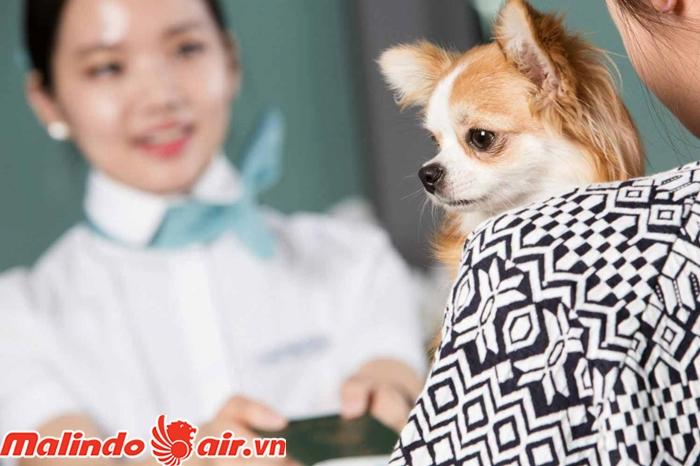 Hành khách tự chuẩn bị đồ dùng cho thú cưng