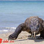 Loài rồng Komodo nổi tiếng