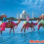 di chuyển ở Ấn Độ cực kì đa dạng
