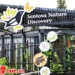 Khám phá hết các địa điểm vui chơi ở Sentosa cần phải 2,3 ngày