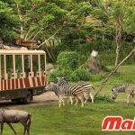 Taman Safari hiện có nhiều loại động vật quý hiếm