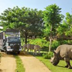 Trải nghiệm thiên nhiên hoang dã ở Taman Safari
