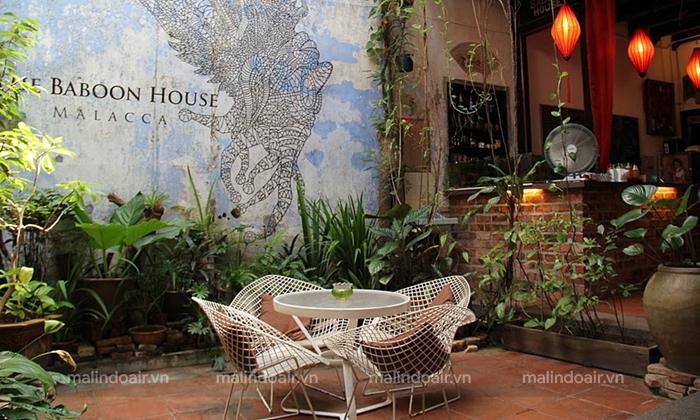Một ngày yên tĩnh tại Baboon House