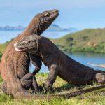 Công viên quốc gia Komodo